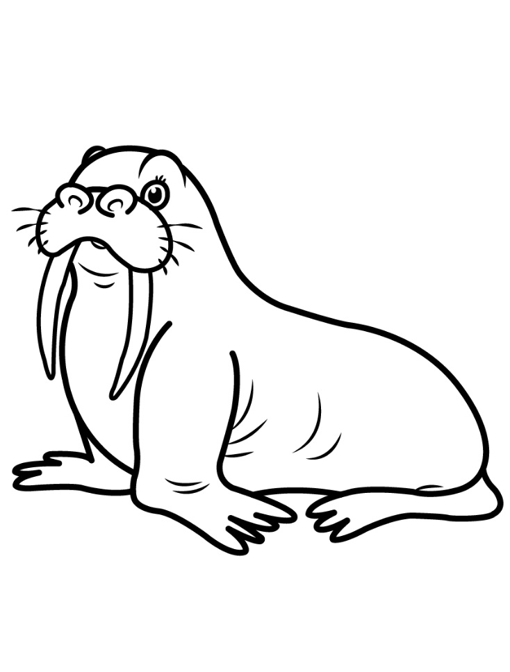 walrus coloring pages walrus coloring pages pages walrus coloring