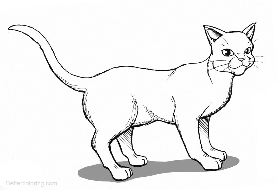 warrior cat coloring pages warrior cat coloring pages to download and print for free warrior cat coloring pages