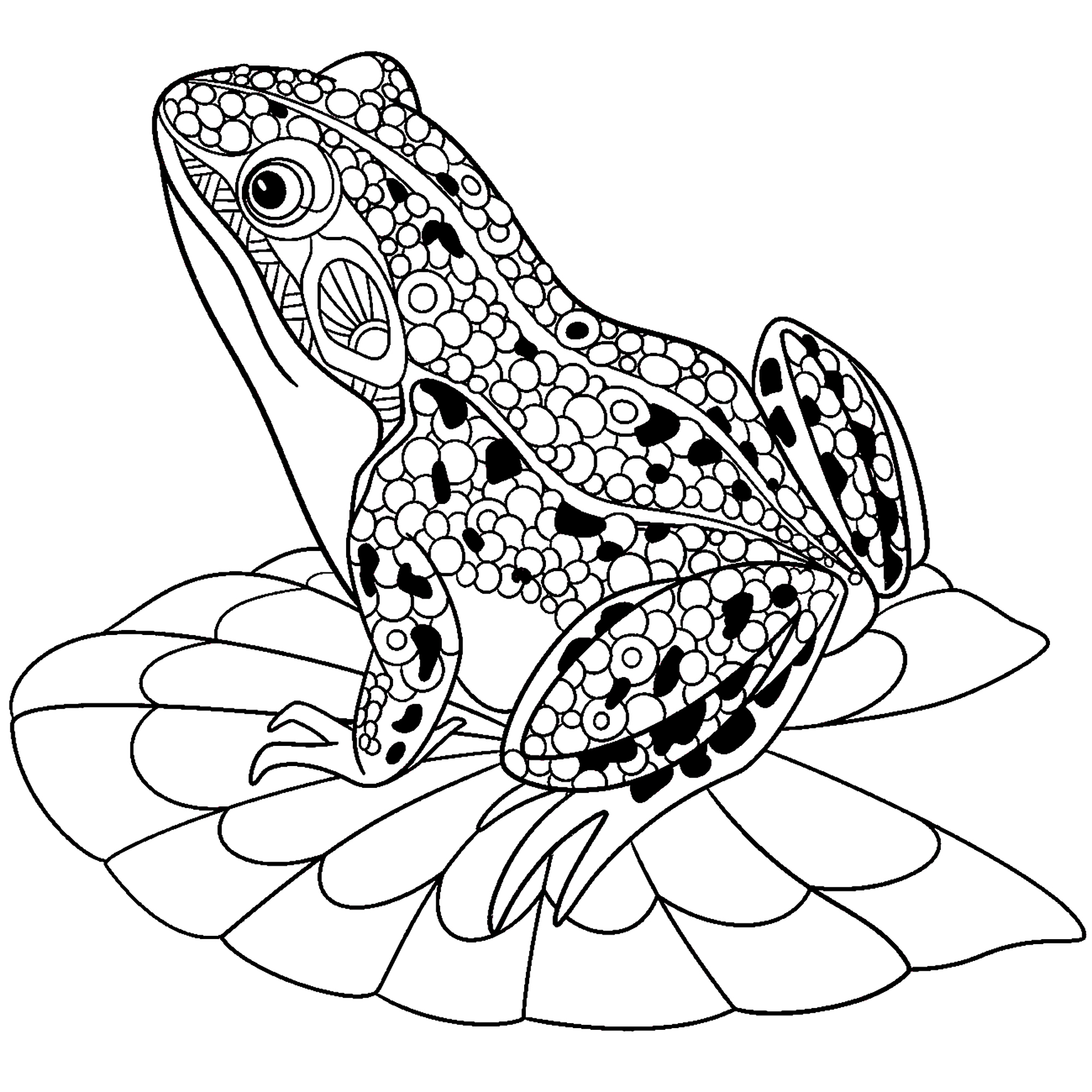 water animal coloring pages cute frog on water lily leaf frogs adult coloring pages pages coloring water animal