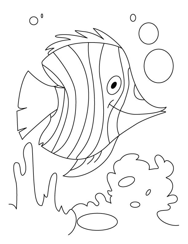 water animal coloring pages five fish swimming in water coloring animal pages water