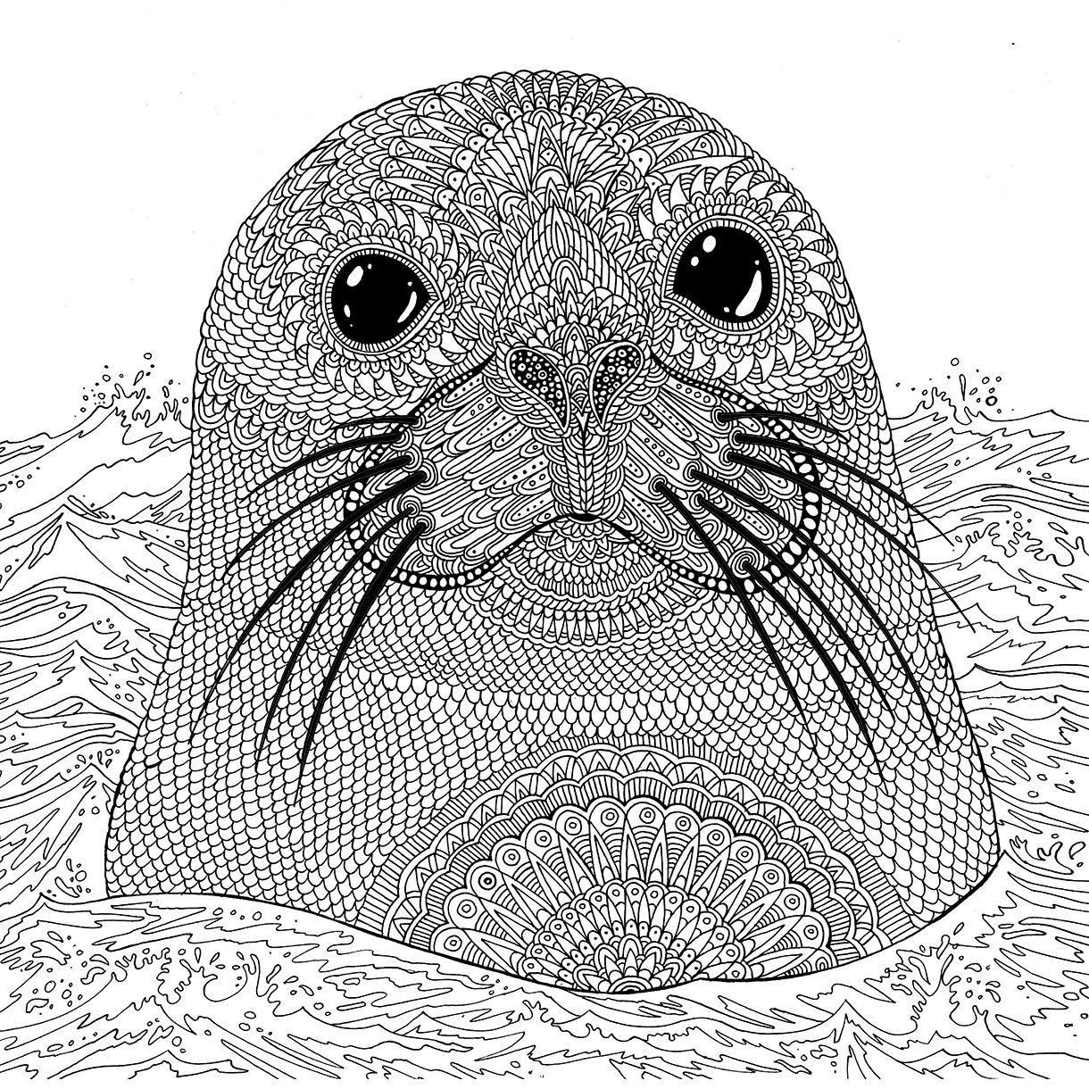 water animal coloring pages seal the aquarium colouring book richard merritt seal pages animal coloring water
