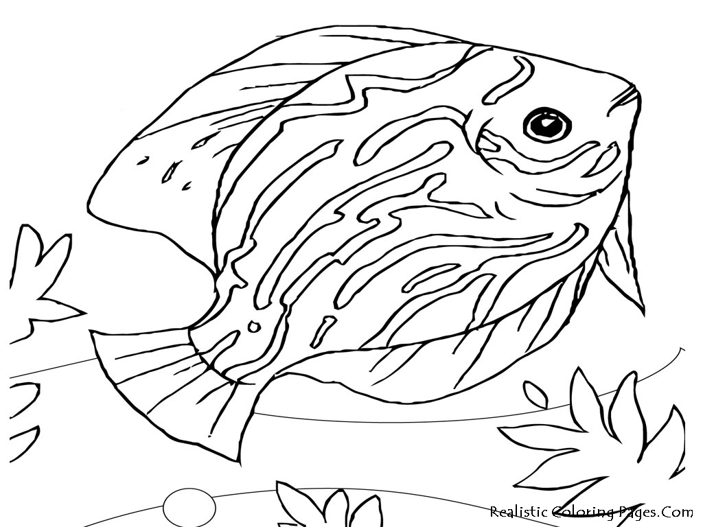 water animal coloring pages water animals drawing at getdrawings free download coloring pages animal water