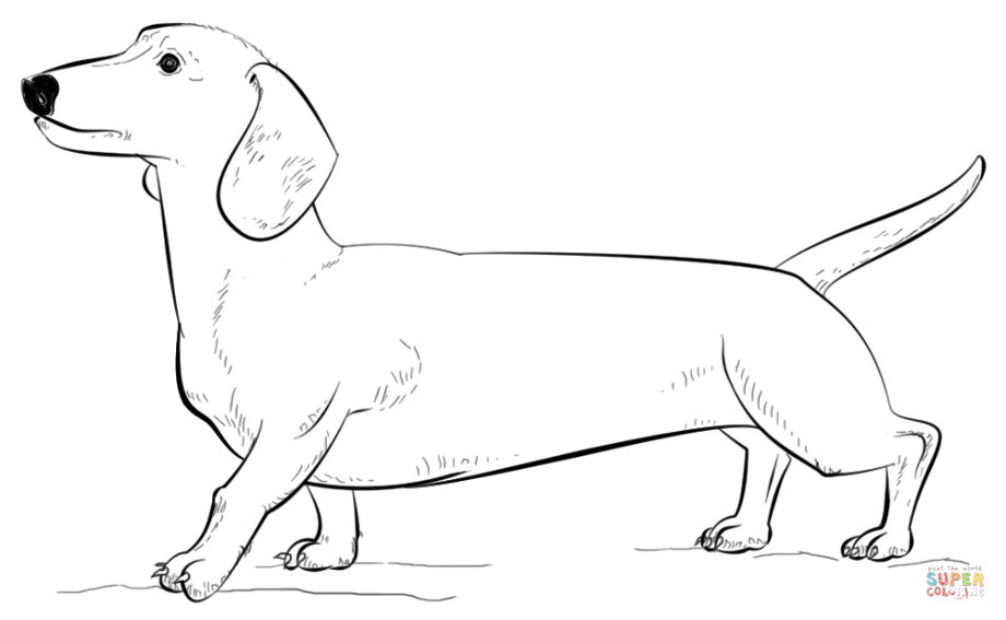 weiner dog coloring pages dachshund coloring pages coloring pages weiner dog coloring pages