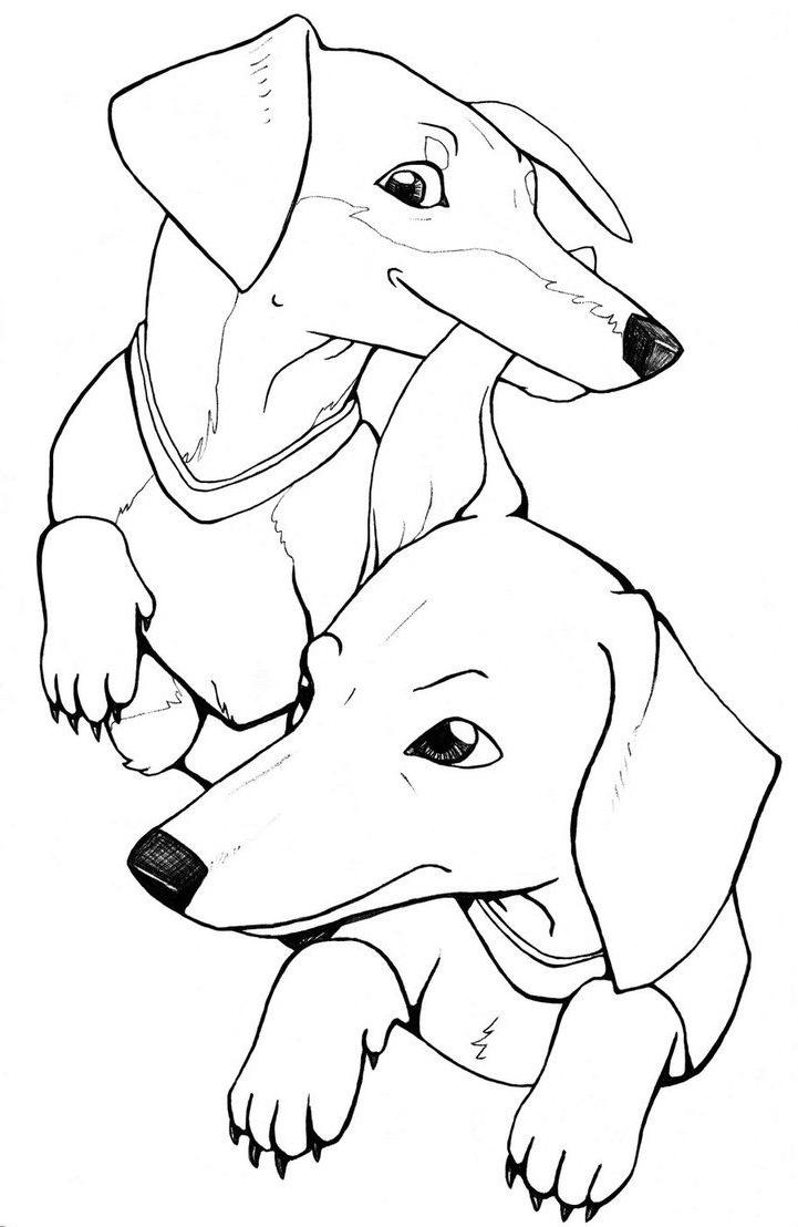 weiner dog coloring pages dachshund puppy coloring pages hellokidscom coloring dog pages weiner