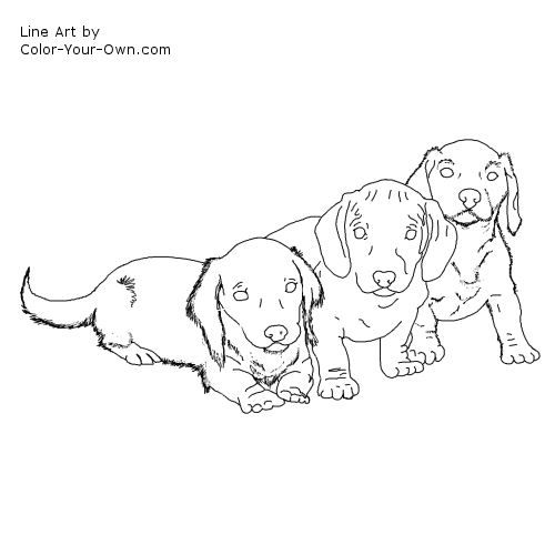 weiner dog coloring pages weiner dog coloring page at getdrawings free download coloring weiner pages dog