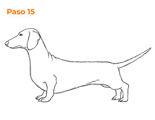 weiner dog drawing dachshund paintings dachshund drawing ferris cook dog drawing weiner