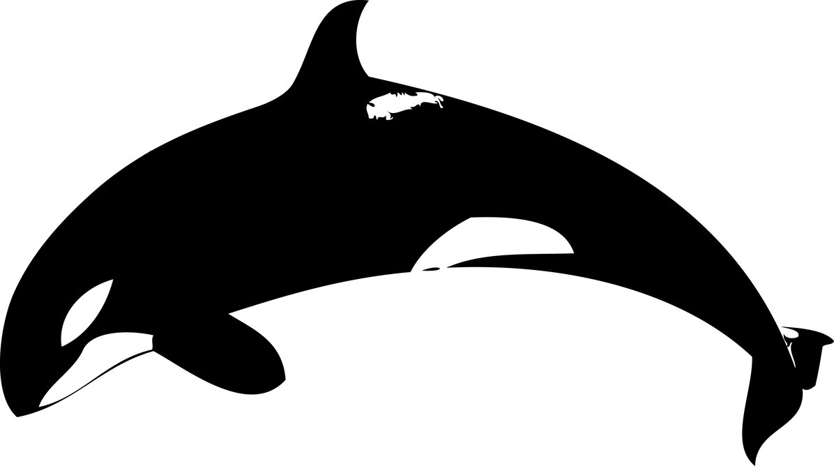 whale outline free printable killer whale coloring pages for kids whale outline