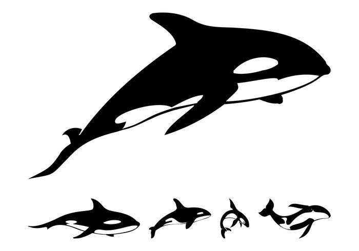 whale shark silhouette killer whale silhouettes download free vector art stock silhouette shark whale