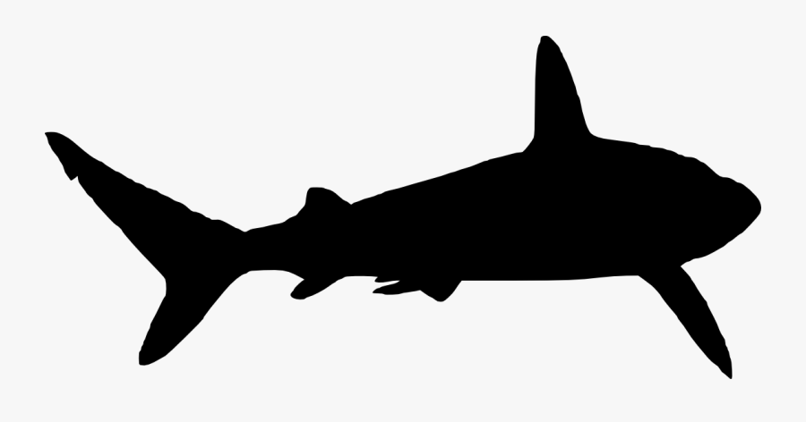 whale shark silhouette whale silhouette images silhouette shark whale