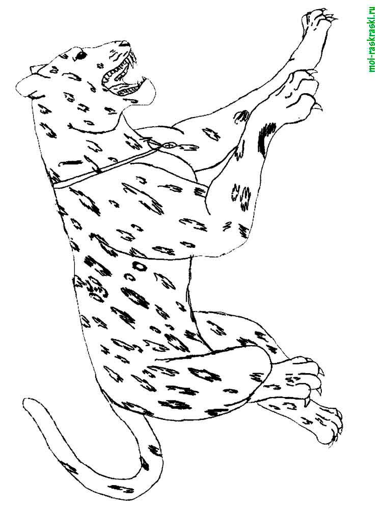 wild animals coloring pages breath of the wild coloring pages divyajananiorg animals wild coloring pages