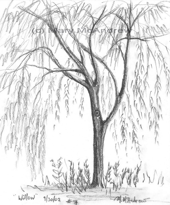 willow tree coloring page coloring pages willow 4 natural world gt trees free coloring page tree willow