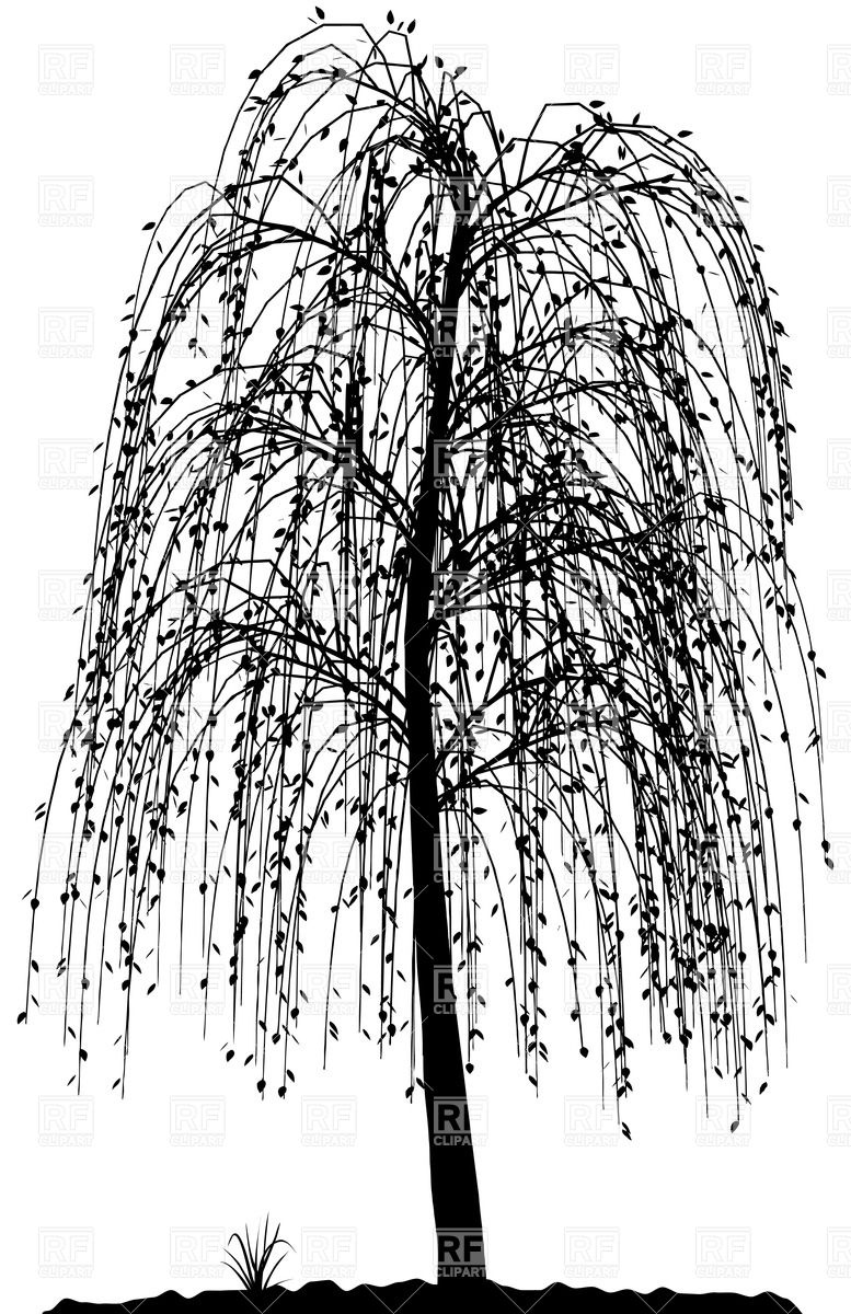 willow tree coloring page download weeping willow coloring for free designlooter tree page willow coloring