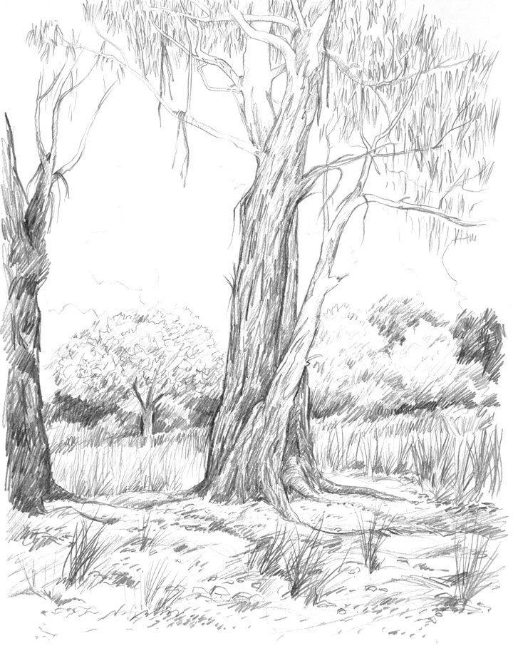 willow tree coloring page mwillow tree pencil coloring pages coloring willow page tree