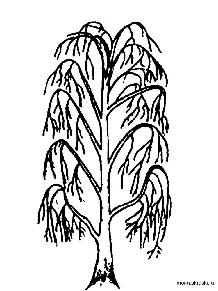 willow tree coloring page weeping willow coloring download weeping willow coloring tree coloring willow page