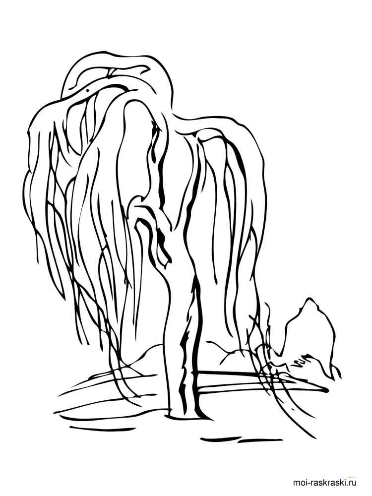 willow tree coloring page willow tree coloring pages for kids free printable willow page willow coloring tree