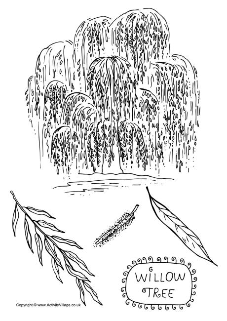 willow tree coloring page willow tree colouring page tree willow coloring page