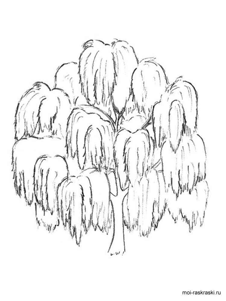willow tree coloring page winter weeping willow coloring pages page willow coloring tree