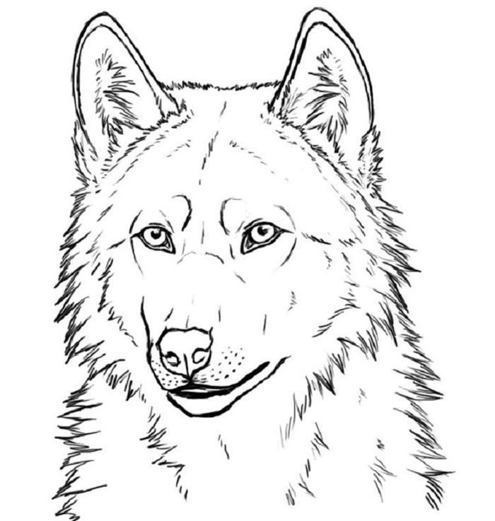wolf face coloring pages adult wolf face coloring pages printable face coloring pages wolf