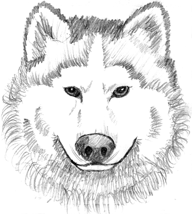 wolf face coloring pages wolf face coloring page coloring home free printable wolf coloring face pages