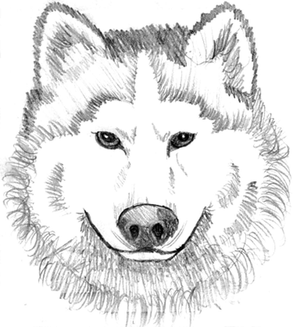 wolf face coloring pages wolf face drawing step by step at getdrawings free download coloring face pages wolf
