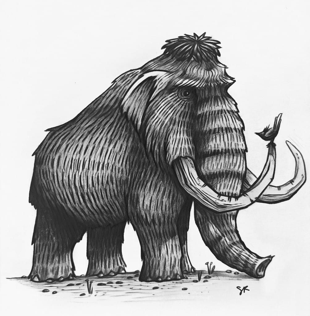 wooly mammoth drawing illustration of a woolly mammoth z1 drawing by historic wooly mammoth drawing