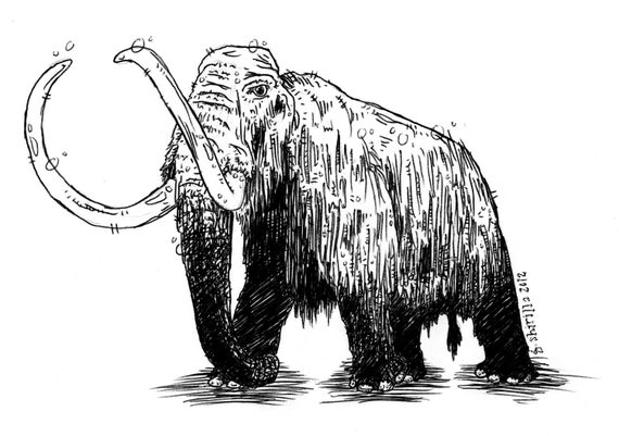 wooly mammoth drawing items similar to original woolly mammoth drawing on etsy mammoth wooly drawing