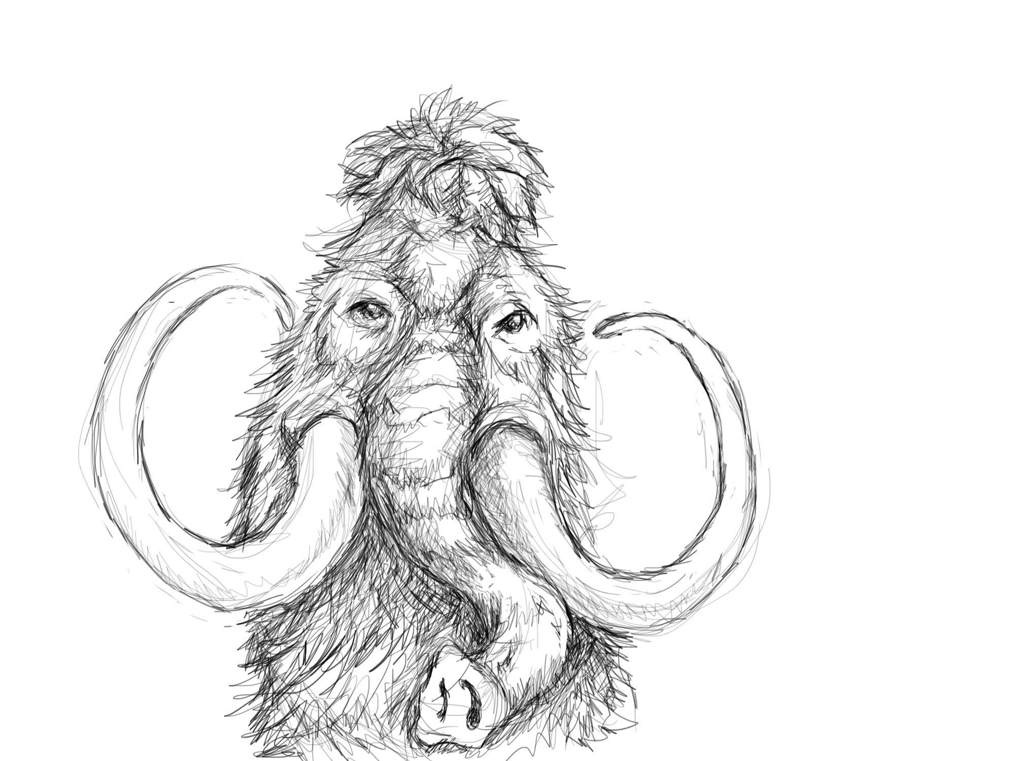 wooly mammoth drawing learn how to draw a woolly mammoth other animals step by wooly mammoth drawing