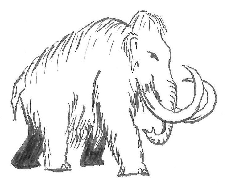 wooly mammoth drawing mammoths drawings yahoo image search results mammoth wooly drawing mammoth