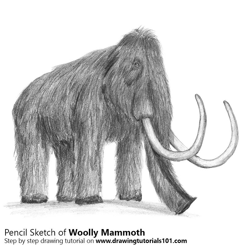wooly mammoth drawing woolly mammoth by hwolfer on deviantart wooly drawing mammoth