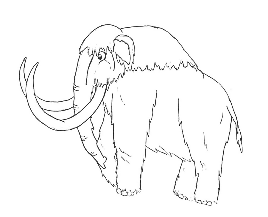 wooly mammoth drawing woolly mammoth by pelycosaur24 on deviantart drawing mammoth wooly