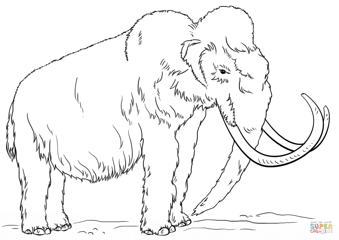 wooly mammoth drawing woolly mammoth coloring page free printable coloring pages mammoth drawing wooly