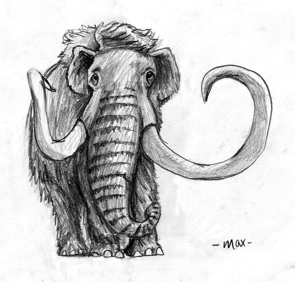 wooly mammoth drawing woolly mammoth drawing illustration by sara riley in wooly drawing mammoth