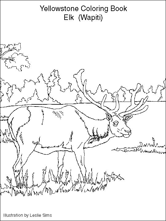 yellowstone national park coloring pages national park coloring pages at getcoloringscom free coloring national pages yellowstone park