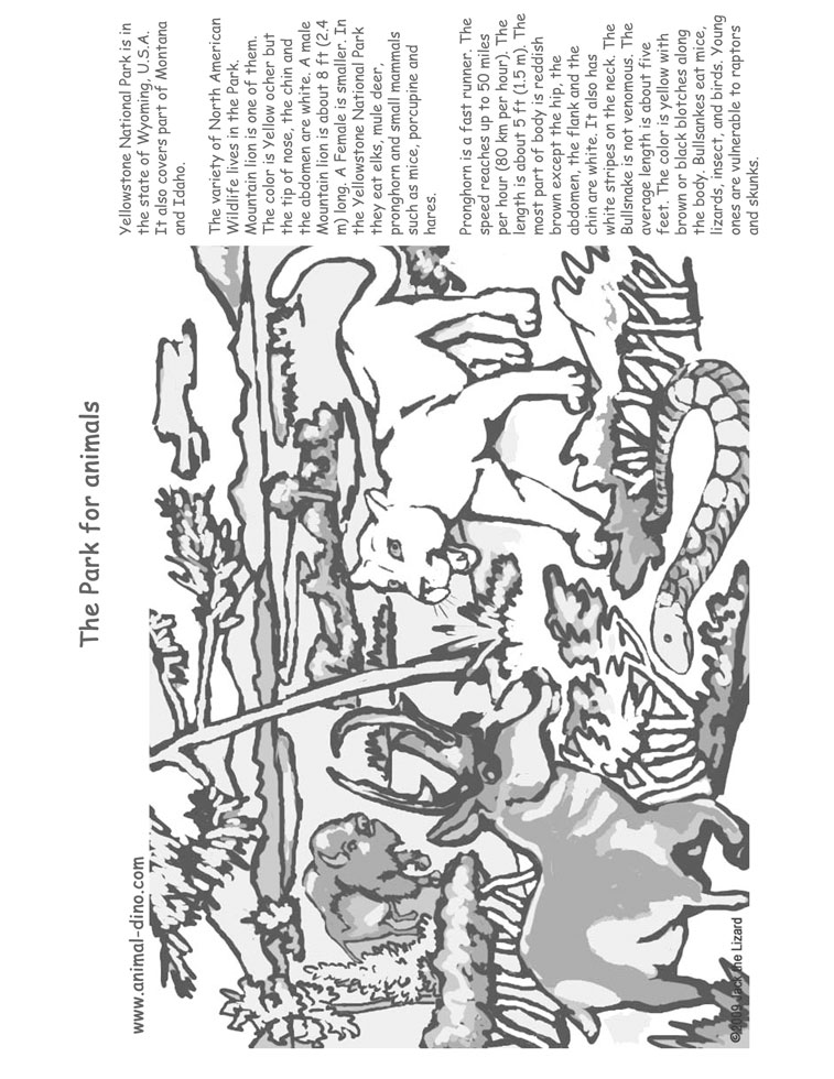 yellowstone national park coloring pages yellowstone national park old faithful geyser coloring park yellowstone pages national coloring