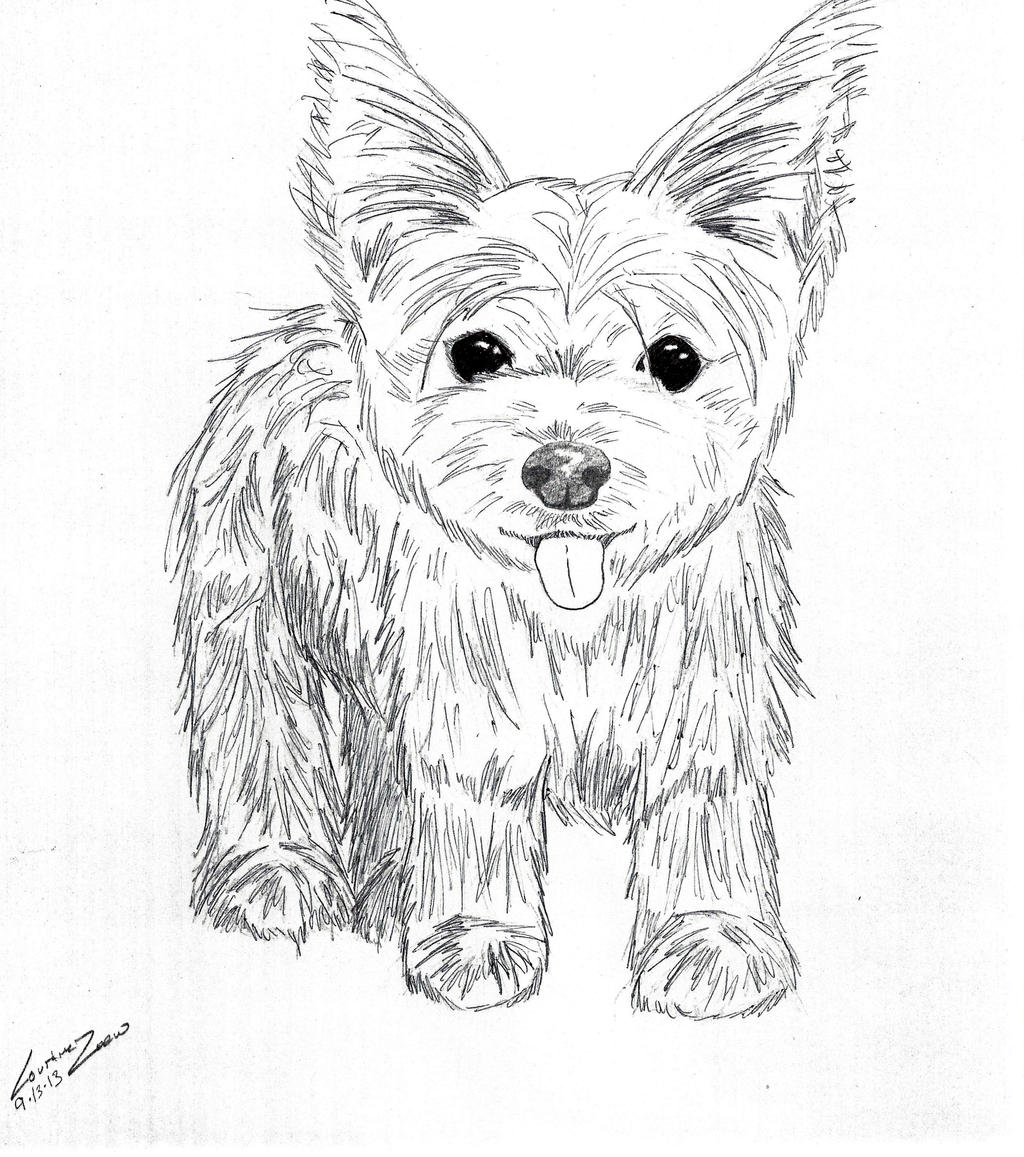 yorkie coloring pages cute yorkie coloring pages free printable coloring pages coloring yorkie pages