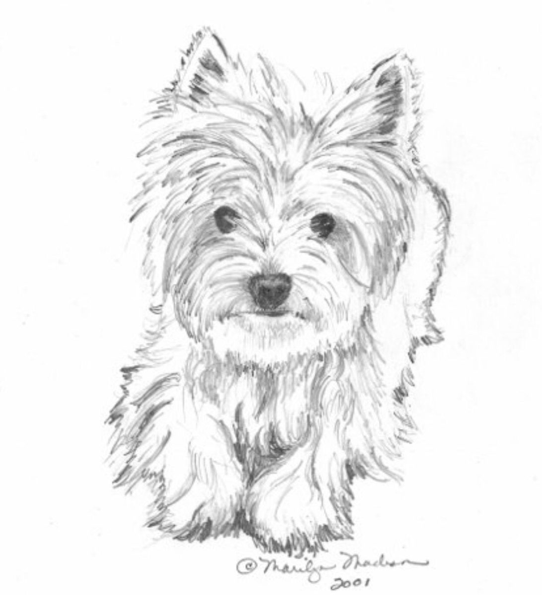 yorkie coloring pages yorkie coloring page coloring home pages coloring yorkie
