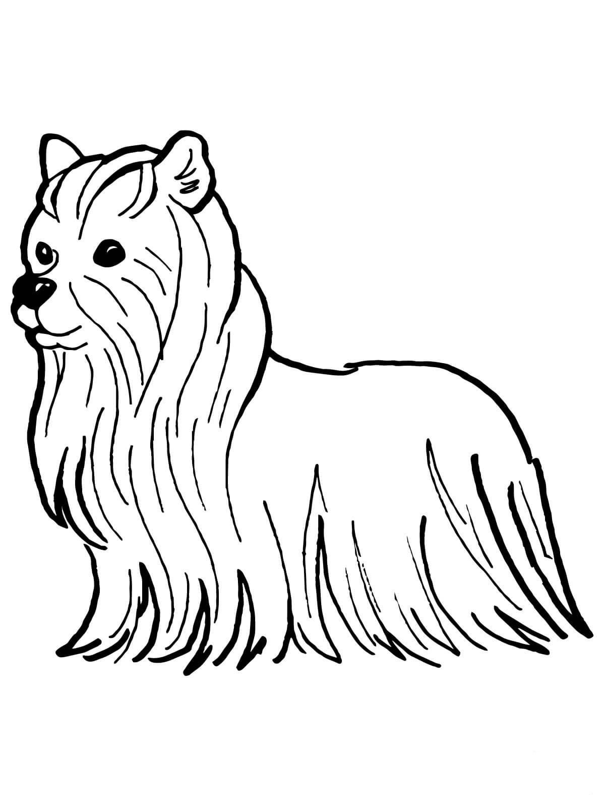yorkie coloring pages yorkshire coloring pages coloring pages to download and pages coloring yorkie