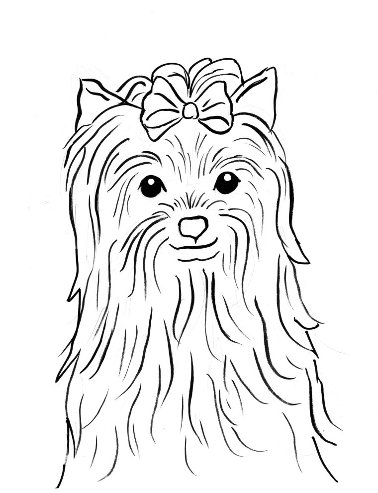 yorkie coloring sheet yorkie cartoon drawing at getdrawings free download yorkie coloring sheet