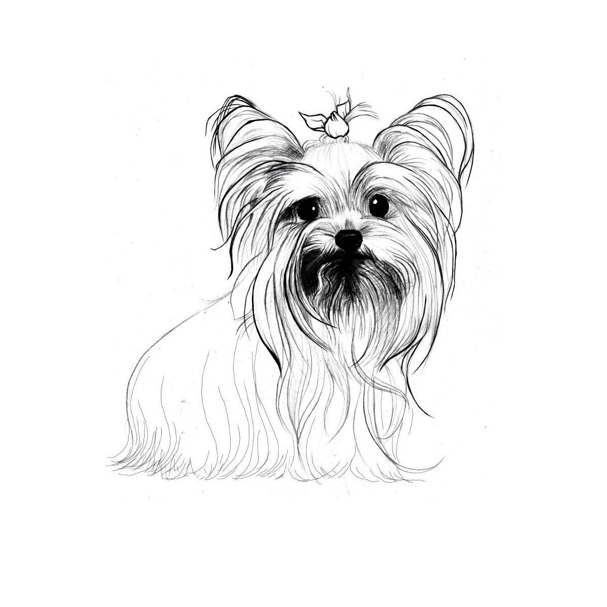 yorkie coloring sheet yorkie coloring pages books 100 free and printable yorkie sheet coloring