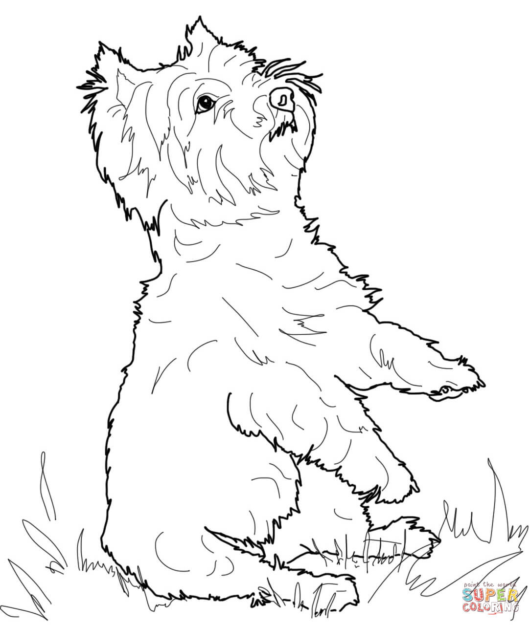 yorkie coloring sheet yorkie coloring sheet yorkie sheet coloring
