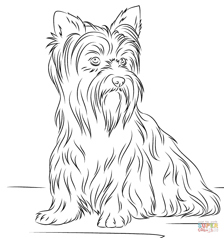 yorkie coloring sheet yorkie dog drawing at getdrawings free download sheet coloring yorkie