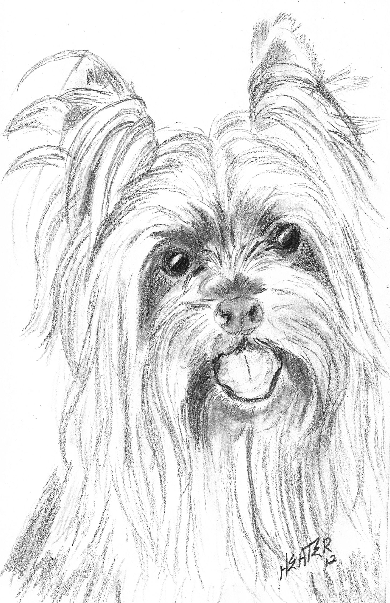 yorkie coloring sheet yorkie puppy coloring pages free printable coloring pages yorkie sheet coloring