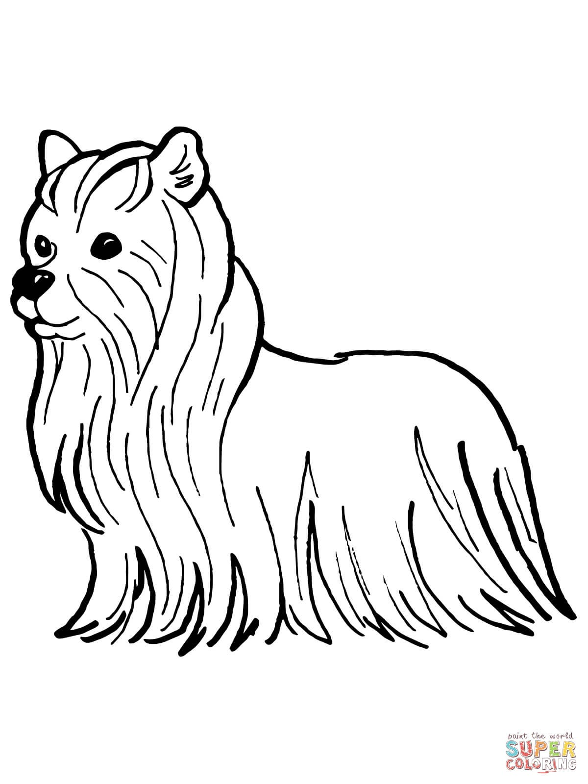 yorkie coloring sheet yorkshire coloring pages coloring pages to download and coloring yorkie sheet