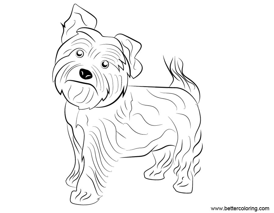 yorkie coloring sheet yorkshire coloring pages coloring pages to download and yorkie sheet coloring