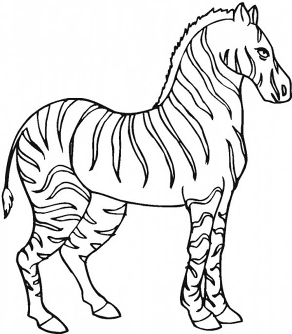 zebra color page zebra coloring pages free printable kids coloring pages zebra page color