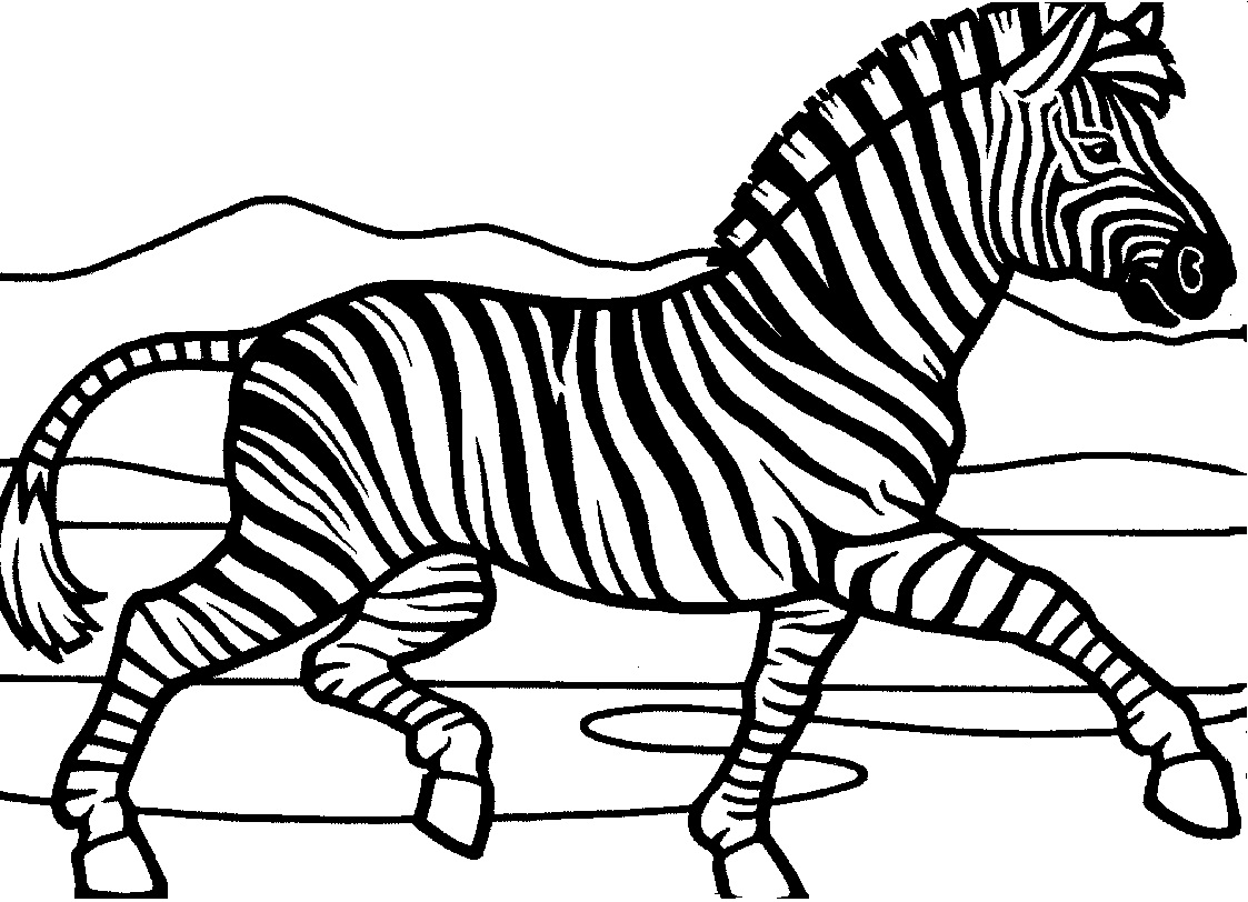 zebra coloring pages free zebra coloring pages coloring pages zebra