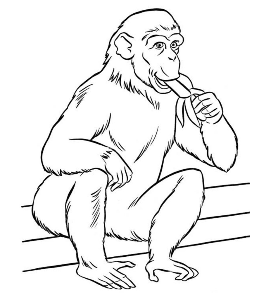 zoo animals colouring free printable zoo coloring pages for kids colouring zoo animals