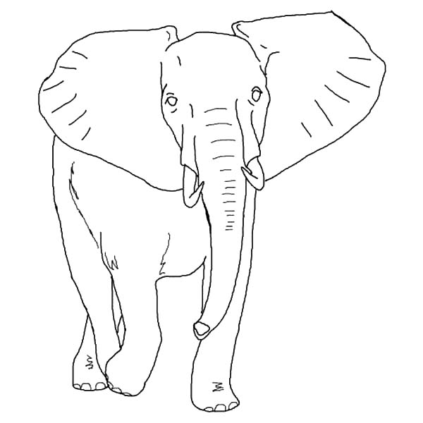african elephant coloring pages africa elephant africa adult coloring pages elephant pages coloring african