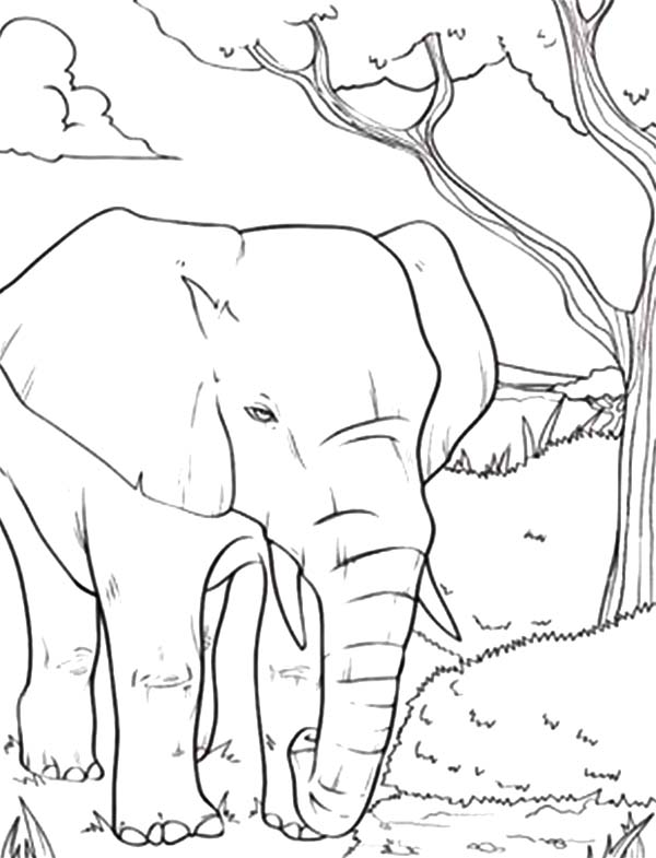 african elephant coloring pages african bush elephant coloring page free elephant african pages coloring elephant