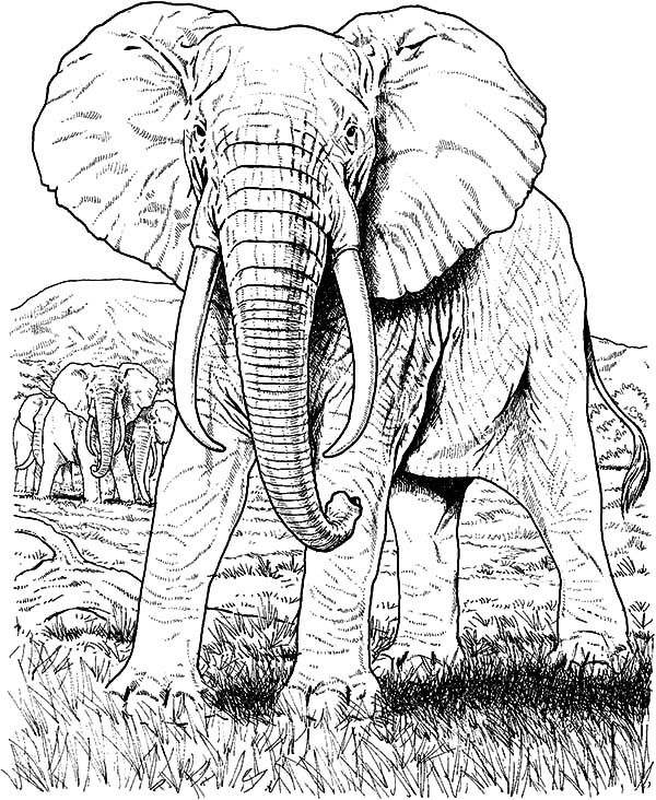 african elephant coloring pages african elephant coloring page free elephant coloring elephant pages coloring african